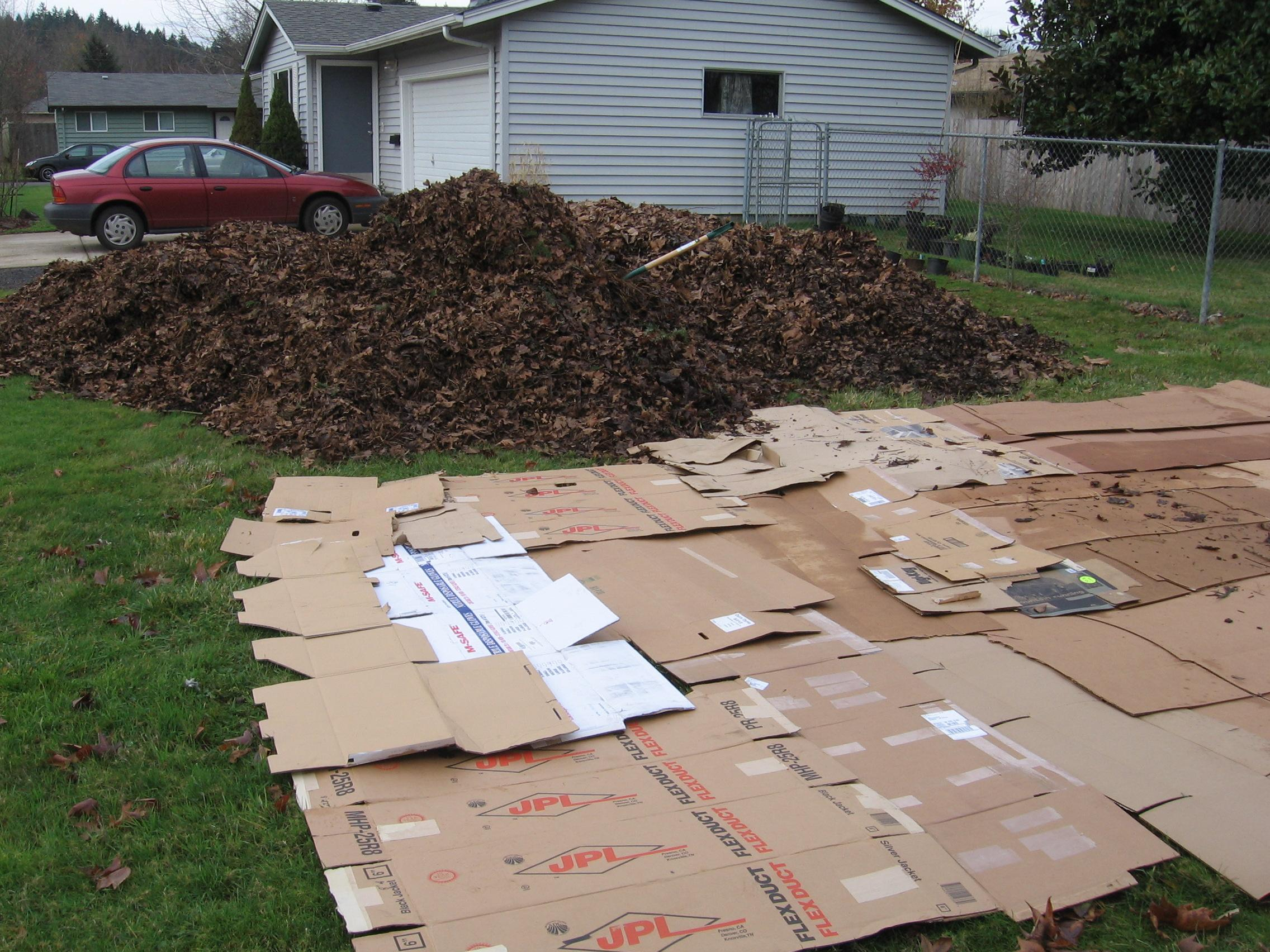 our first pile of leaves