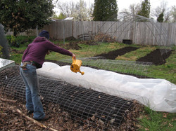 jess watering the new beds