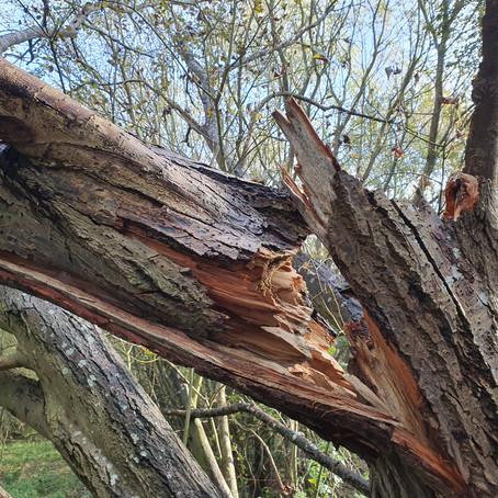 The broken woods