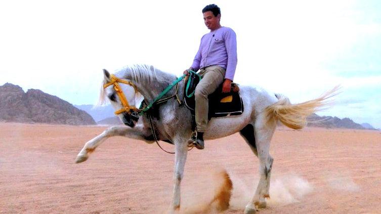 Экскурсия в египте. Где покататься на верблюде в шарме. Шарм ель шейх. Горящие туры в египет. Виза в египет