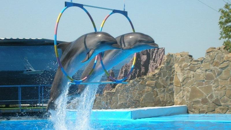 Экскурсия на шоу дельфинов с Шарм эль Шейха. Поплавать с дельфинами в Египте. Экскурсии с шарма. Туры в Египет
