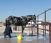 Horse getting a bath.jpg
