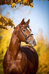 Quaterback, Nadine Harms, Pferdefotografie