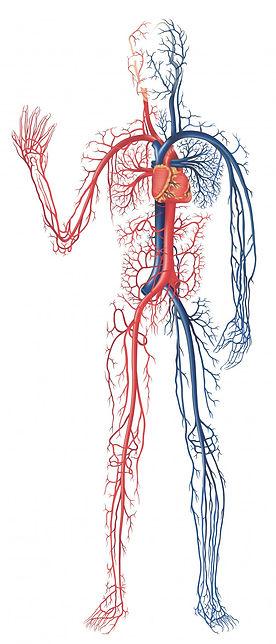 software-like-a-central-nervous-system.jpg