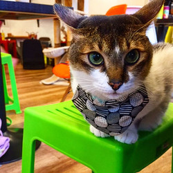 Day at The Cat Cafe~ 😸