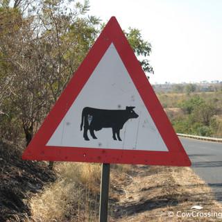 Kruger National Park. Photo: Rowena Smith