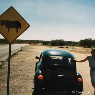 Baja California, Mexico. Photo: Paola Laguerre