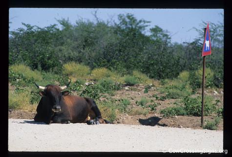 Botswana. Photo: Pep Canadell