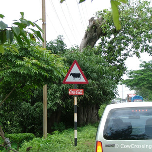 Goa. Photo: Greg Foster