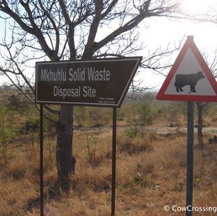 Kruger National Park. Photo: Pep Canadell