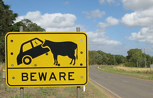 Awsome cow crossin sign