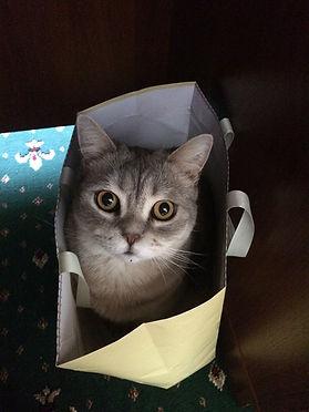 cat-with-bag.jpg