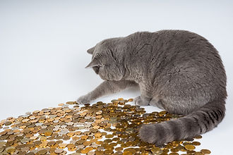 cat-with-coins.jpg