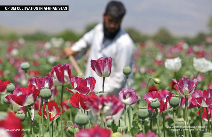 Poppy Cultivation in Afghanistan