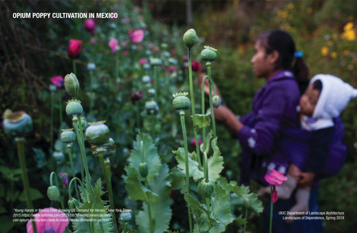 Poppy Cultivation in Mexico