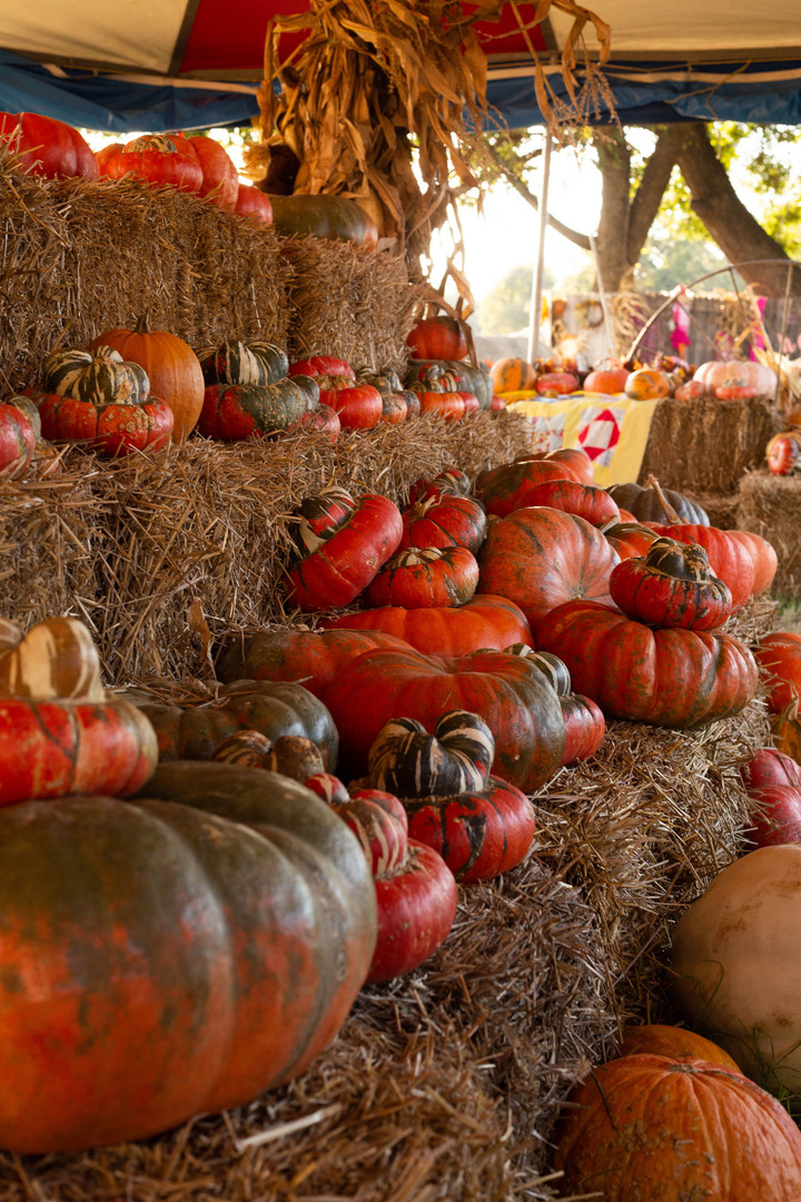 pumpkin tent.jpg