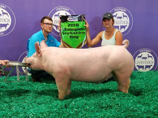 Cameron Hayden, Grand Champion, Michigan Livestock Expo