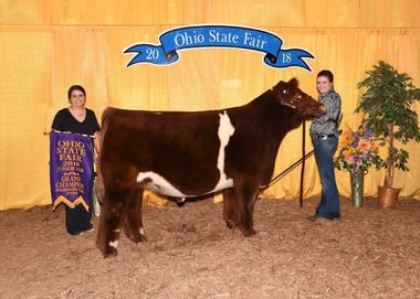 Kassidy Thompson, Champion Shorthorn Plus Steer, Ohio State Fair