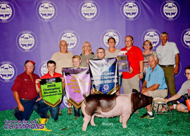 Collin Trattles, Reserve Champion Market Hog, Michigan Livestock Expo