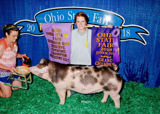 Maddie Harrison, Reserve Supreme Breeding Gilt, Ohio State Fair