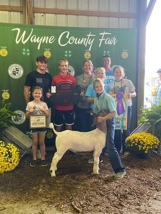 Cooper Wolf, Grand Champion, Wayne Count