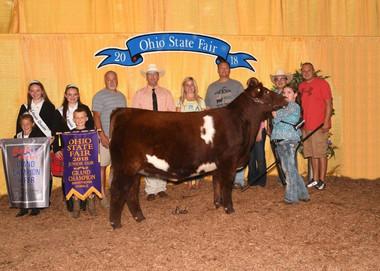 Sara Britton, Champion Shorthorn Heifer, Ohio State Fair