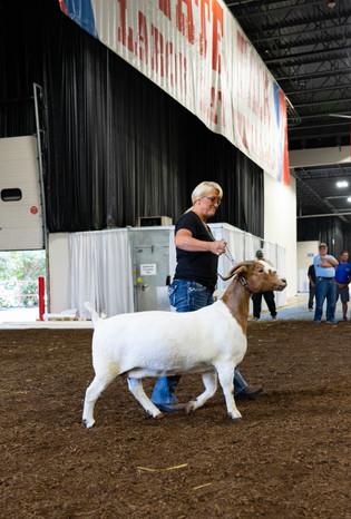 Terri Fryman, Supreme Overall Grand Champion, Michigan State Fair.jpeg