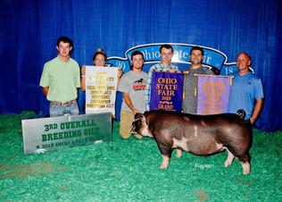 Matt Younker, 3rd Overall Breeding Gilt, Ohio State Fair