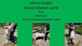 Alison Knightt, Grand Champion Lamb Wayn