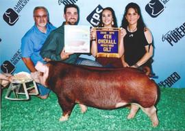 Barker Family Show Pigs, 4th Overall Hereford Gilt, World Pork Expo