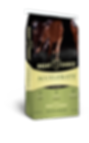 Accelerate Textured Horse Feed
