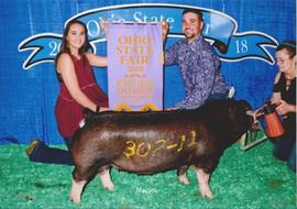 Barker Family Show Pigs, Reserve Champion Poland China Gilt, Ohio State Fair