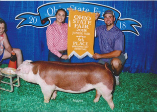 Barker Family Show Pigs, 5th Overall Hereford Breeding Gilt, Ohio State Fair