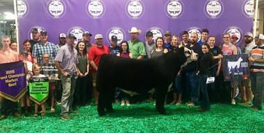 Emma Noll, Grand Champion Steer, Michigan Livestock Expo