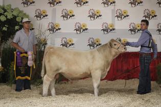 Jordan Kelly, Reserve Champion AOB Bull, Maryland State Fair.jpeg