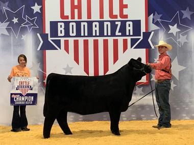 Reserve Champion Chi Heifer, Cattle Bonanza