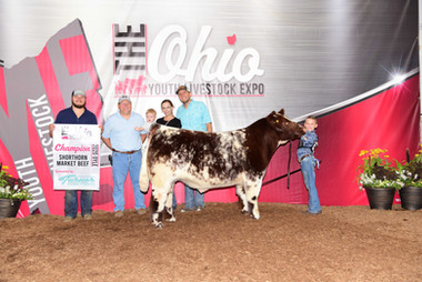 Gavin Richards, Grand Champion Shorthorn, Ohio Youth Livestock Expo