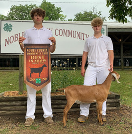 Robert Thompson, Best in Show Noble Coun