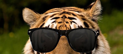 cooltiger_edited.jpg