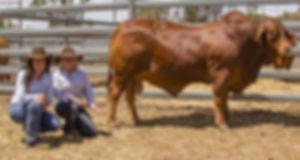 top price bull.jpg
