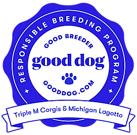 triple-m-corgis-michigan-lagotto-michiga