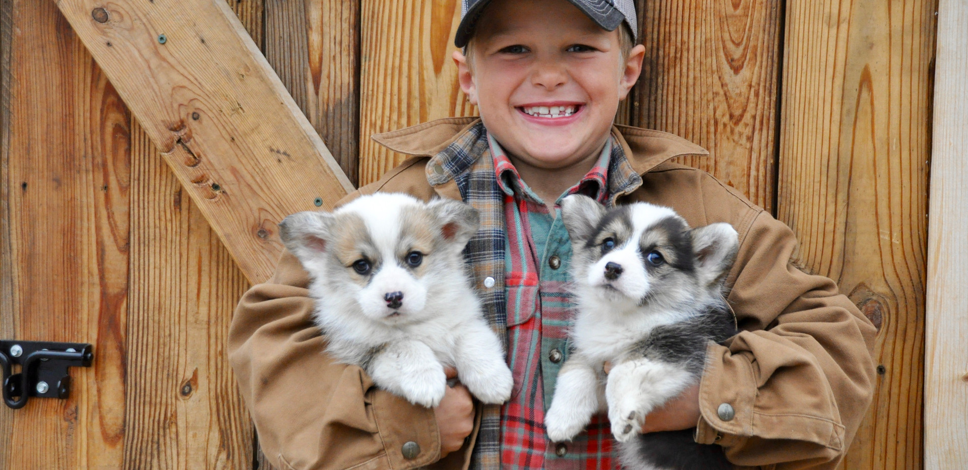Miles with Dolly x Stetson Puppies