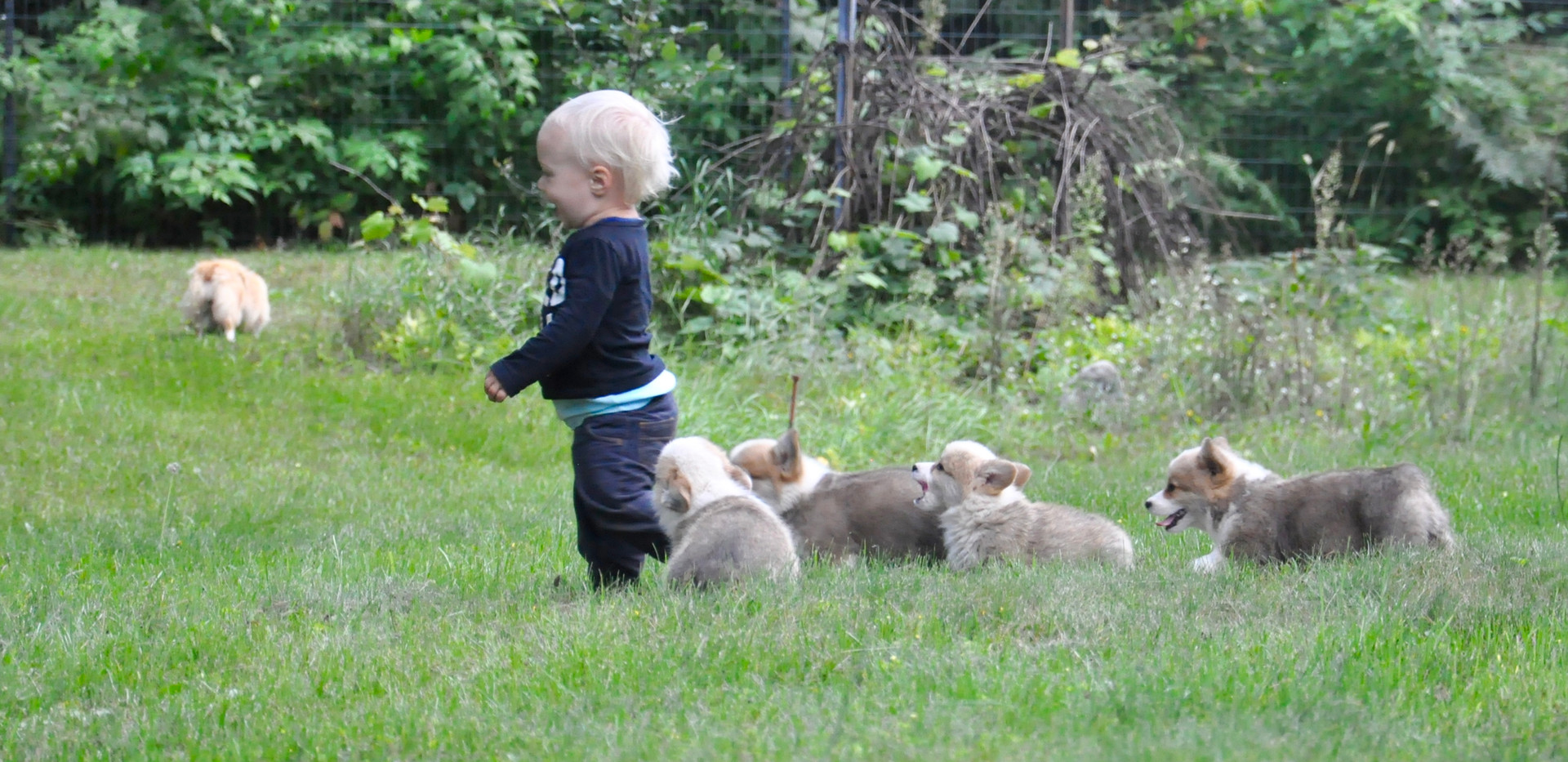 Mack with Fancy x Stetson Puppies