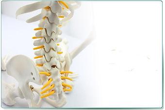 85-cm-menselijk-skelet-model-met-spinale