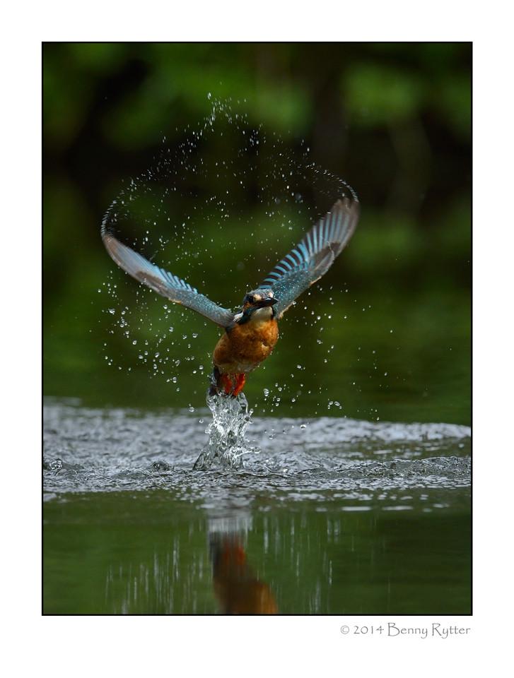 Naturfotograf_Benny_Rytter_105.jpg