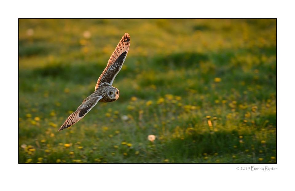 Naturfotograf_Benny_Rytter_220.jpg