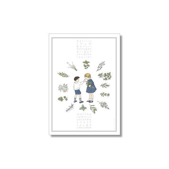 Affiche des herbes aromatiques
