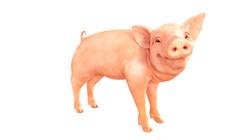 pig_large__standing_pose