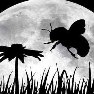 Moonbee Logo Design