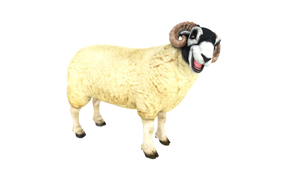 Sheep_large_stand_pose